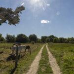 Martin Liebscher: Pferde, Ahrenshoop   01.09.20 14:27